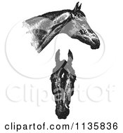 Clipart Of A Retro Vintage Engraved Horse Anatomy Of Good Heads In Black And White Royalty Free Vector Illustration