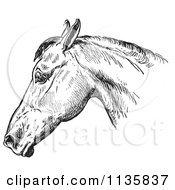 Clipart Of A Retro Vintage Engraved Horse Anatomy Of A Bad Head In Black And White 1 Royalty Free Vector Illustration