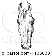 Clipart Of A Retro Vintage Engraved Horse Anatomy Of A Bad Head In Black And White 2 Royalty Free Vector Illustration