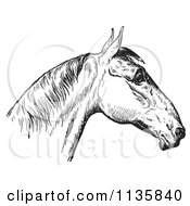 Clipart Of A Retro Vintage Engraved Horse Anatomy Of A Bad Head In Black And White 4 Royalty Free Vector Illustration