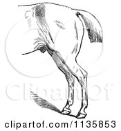 Clipart Of A Retro Vintage Engraved Horse Anatomy Of Bad Hind Quarters In Black And White 4 Royalty Free Vector Illustration
