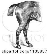 Clipart Of A Retro Vintage Engraved Horse Anatomy Of Good Hind Quarters In Black And White Royalty Free Vector Illustration