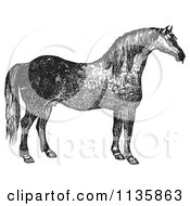 Clipart Of A Retro Vintage Engraved Horse In Black And White Royalty Free Vector Illustration