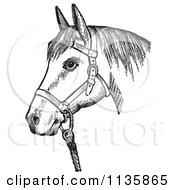 Clipart Of A Retro Vintage Horse With Good Form For A Halter Of In Black And White Royalty Free Vector Illustration