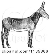 Clipart Of A Retro Vintage Poitou Donkey Ass In Black And White Royalty Free Vector Illustration