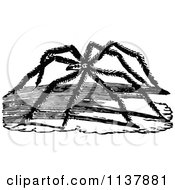 Clipart Of A Retro Vintage Black And White Long Legged Spider Royalty Free Vector Illustration by Prawny Vintage