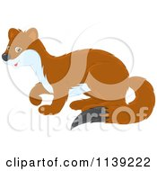 Cartoon Of A Cute Brown And White Weasel Royalty Free Vector Clipart