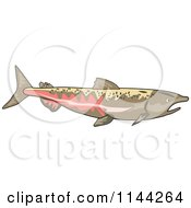 Clipart Of A Chinook Salmon Fish Royalty Free Vector Illustration by patrimonio
