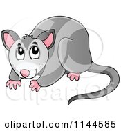 Cartoon Of A Cute Australian Possum Royalty Free Vector Clipart by visekart #COLLC1144585-0161