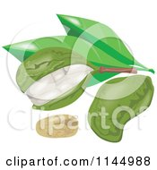 Clipart Of Kola Nut Fruits And Leaves Royalty Free Vector Illustration