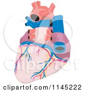 Clipart Of A Human Heart Royalty Free Vector Illustration