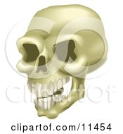 Human Skull With Teeth Clipart Illustration by AtStockIllustration