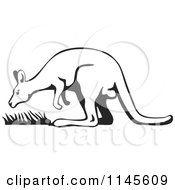 Black And White Kangaroo With Grass