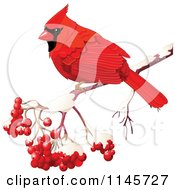Clipart Of A Red Cardinal On A Branch With Berries Royalty Free Vector Illustration by Pushkin
