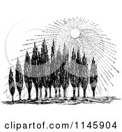 Clipart Of A Retro Vintage Black And White Sun Shining Down On Cypress Trees Royalty Free Vector Illustration