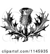 Clipart Of A Retro Vintage Black And White Thistle Flower Royalty Free Vector Illustration by Prawny Vintage #COLLC1145935-0178