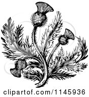 Clipart Of Retro Vintage Black And White Thistle Flower 2 Royalty Free Vector Illustration by Prawny Vintage