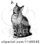 Clipart Of A Retro Vintage Black And White Sitting Cat Watching A Fly Royalty Free Vector Illustration by Prawny Vintage