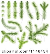 Clipart Of Conifer Tree Branches Royalty Free Vector Illustration