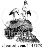 Clipart Of A Retro Vintage Black And White Nest And Herons Royalty Free Vector Illustration by Prawny Vintage