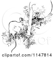 Clipart Of A Retro Vintage Black And White Mouse On A Christmas Tree Branch Royalty Free Vector Illustration