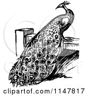 Clipart Of A Retro Vintage Black And White Peacock On A Fence Royalty Free Vector Illustration by Prawny Vintage