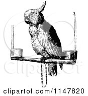 Clipart Of A Retro Vintage Black And White Cockatoo Parrot Royalty Free Vector Illustration