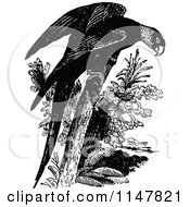 Clipart Of A Retro Vintage Black And White Parrot Royalty Free Vector Illustration by Prawny Vintage