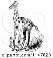 Clipart Of A Retro Vintage Black And White Giraffe Royalty Free Vector Illustration by Prawny Vintage
