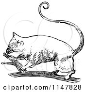 Clipart Of A Retro Vintage Black And White Possum On A Branch Royalty Free Vector Illustration