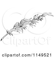 Clipart Of A Retro Vintage Black And White Olive Branch Royalty Free Vector Illustration