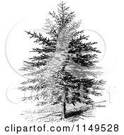 Clipart Of A Retro Vintage Black And White Pine Tree Royalty Free Vector Illustration by Prawny Vintage