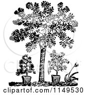 Clipart Of A Retro Vintage Black And White Tree And Potted Plants Royalty Free Vector Illustration by Prawny Vintage