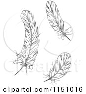 Clipart Of Black And White Feathers 2 Royalty Free Vector Clipart