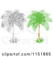 Clipart Of An Outlined And Colored Palm Tree Royalty Free Vector Illustration