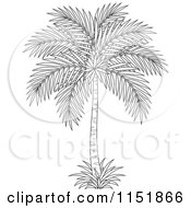 Clipart Of An Outlined Palm Tree Royalty Free Vector Illustration