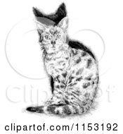 Cartoon Of A Black And White Sitting Cat Royalty Free Vector Illustration by lineartestpilot