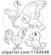 Cartoon Of An Outlined Ostrich Parrot Chicken And Parrot Royalty Free Vector Clipart