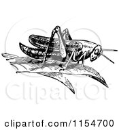 Retro Vintage Black And White Grasshopper