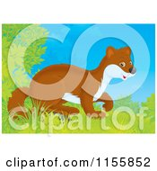 Cartoon Of A Cute Weasel Emerging From Shrubs Royalty Free Illustration by Alex Bannykh