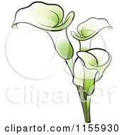 Clipart Of Green Calla Lily Flowers Royalty Free Vector Illustration by Lal Perera #COLLC1155930-0106