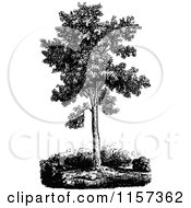 Clipart Of A Retro Vintage Black And White Sugar Maple Tree Royalty Free Vector Illustration by Prawny Vintage