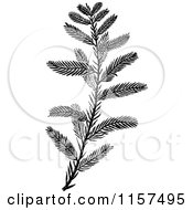 Clipart Of A Retro Vintage Black And White Cypress Sprig Royalty Free Vector Illustration by Prawny Vintage