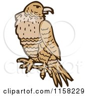 Cartoon Of A Hawk Royalty Free Vector Illustration