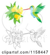Cartoon Of Colored And Outlined Hummingbirds Getting Nectar From Bell Flowers Royalty Free Illustration
