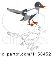 Cartoon Of A Colored And Outlined Magpie Royalty Free Illustration by Alex Bannykh