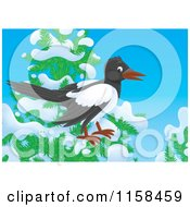 Cartoon Of A Magpie On A Tree With Snow Royalty Free Illustration