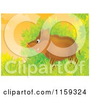 Cartoon Of A Boar Emerging From Shrubs Royalty Free Clipart