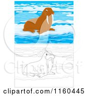 Cartoon Of Outlined And Brown Walruses On Ice Royalty Free Vector Clipart by Alex Bannykh