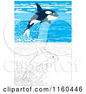 Cartoon Of Cute Outlined And Colored Orca Whales Leaping Out Of Water Royalty Free Vector Clipart